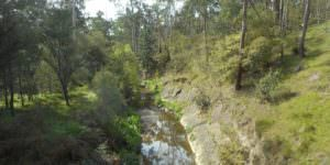 A river in the bush